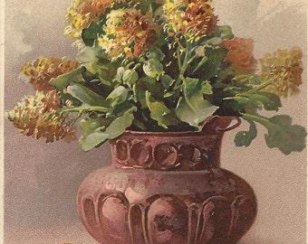 Vintage Postcard - Catherine Klein - Hydrangea - Series 1524