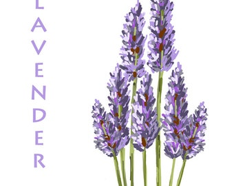 Lavender Flowers  -  Original Art Download, 2 files, lavender clip art, lavender printable