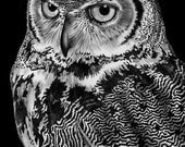 Great Horned Owl Ink Drawing. *Signed by Artist*