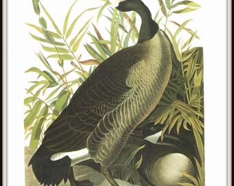 Canadian Goose Art Print, Bird Art Print, 19th Century Audubon Artwork, 1970s Vintage Lithograph Art Print, Home Decor, Wildlife, Wall Art