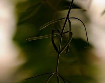 Photography card-Fine art photograph-Green card- Green photograph-Fern card-Fern photograph-Natural heart-Green heart-Heart card-Heart photo