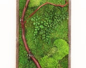 """12"""" x 36"""" Artisan Moss Plant Painting- No Care Green Moss Wall Art. Real Preserved Plants.  Moss and Fern Art. Reclaimed Wood."""