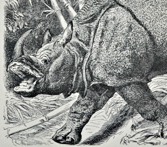 Rhinoceros. Old book plate, 1897. Antique illustration. 117 years lithograph. 9'6 x 6'2 inches.
