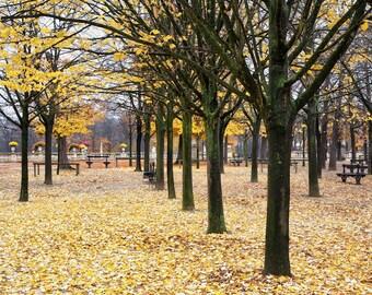 Paris photography, Luxembourg garden, autumn leaves, autumn color, yellow, French wall art, Paris decor, home decor, fine art print