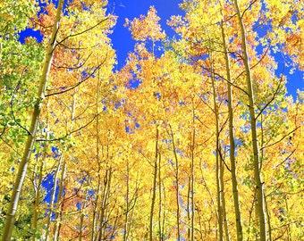 Aspen tree fall photo, Colorado art, fall tree photo, rustic decor, fall art, cabin decor, living room fall art, landscape nature, cabin art