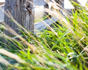 Prairie Landscape Photograph - Rustic Grey Weathered Wooden Farm Fence with Tall Crisp Green Grass