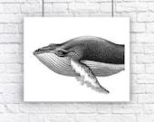 Large Humpback Whale Portrait Nautical Vintage Style Art Print Beach House Decor Black and White Grey