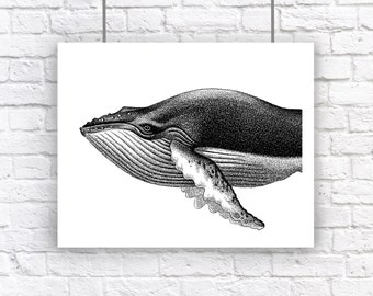 Large Humpback Whale Portrait Nautical Vintage Style Art Print Beach House Decor Black and White Grey