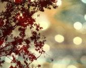 Tree, Nature, Sky, Landscape, Bokeh Nature Photography, Dark Red, Gold, Maroon, Burgundy Wall Art