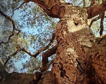 Tree Photography, Surreal Woodland Photo, California Nature Art, Dryad Female Tree, Live Oak Tree Woman, Instant Digital Download JPEG file.