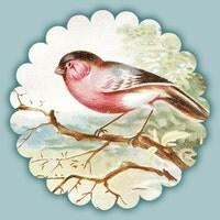 thevintagepaperbird