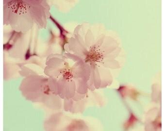 Flower Photograph - Nature Photography - Pink - Fleeting - Cherry Blossom - Bloom - Fine Art Photography - Pink - Light - Bock - Blue Sky