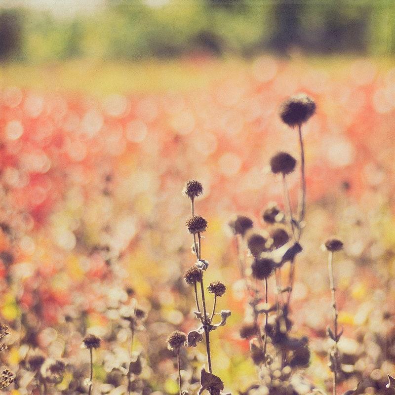 Gallery32 etsy Autumn Bokeh Red Field Kansas Landscape Fine Art Photos