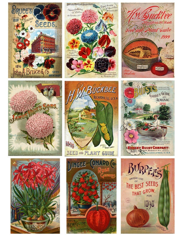 vintage seed packets, flowers, fruits and vegetables ...