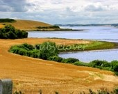 Fields of Gold, Northern IRELAND Landscape Photo, Greyabbey Co. DOWN, Ards Peninsula, Norn Iron, Perfect St. Patrick's Gift, IRISH Country