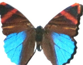 24 Brown, Orange and Blue Paper Butterfly Embellishments for SIY Weddings, Baby Showers, DIY ACEO, Cupcake Toppers, Butterfly Wall Decor