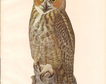 Great Horned Owl Vintage Color Book Plate 57 / Birds Of America 1936 / Louis Agassiz Fuertes