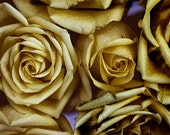 Gold Roses Photograph, Abstract Wall Decor, Gold Flower Photo, Floral Art Print, Yellow Rose