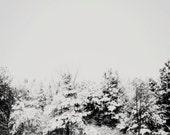 Black and White Photography, Minimal Landscape, Tree Photography, Grey Forest, Trees, Black and White, Modern Home Decor, Snow