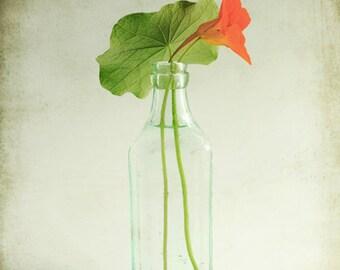 "Flower Photograph | nasturtium still life | minimal art print | orange flower | aqua green orange | vintage bottle  8x10  ""Nasturtium"""