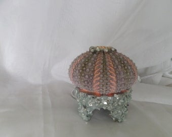 Beach Decor-From Sushi To  Sea Urchin Table Night Light