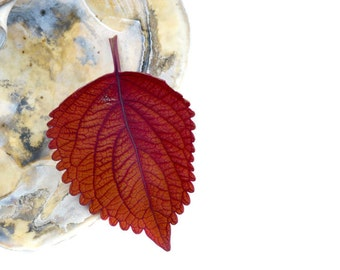 Red Leaf Still Life Photography Art Modern Home Decor Botanical Nature Print