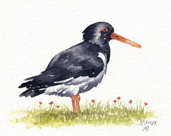 Watercolor sketch - Oystercatcher