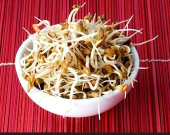 Organic Fenugreek Heirloom Herb or Sprout Seeds