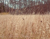 Landscape Photo, Rustic Wall Decor, Nature Photograph, Woodland Decor, Beige, Sky Blue, Brown, Farmhouse Decor, Fine Art Photography