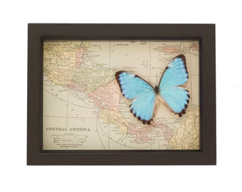Vintage map of Central America with Blue Morpho