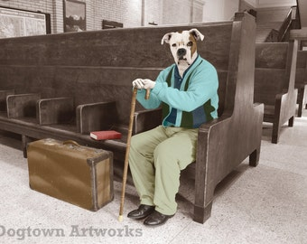 Homeward Bound, large original photograph of white boxer dog wearing clothes waiting at the train station