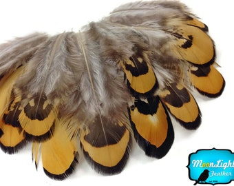 Wholesale Feathers, 1/4 lbs - GOLDEN YELLOW Reeves Venery Pheasant Plumage Wholesale feathers (bulk) : 3604