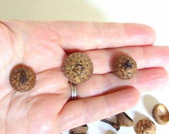 50 Acorn Caps - Natural Small Oak Nut Tops J