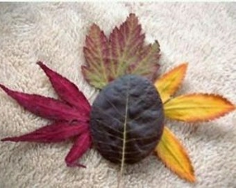 200 Real pressed dried fall leaves autumn wedding natural organic decor
