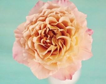 flower photography, floral nursery art, flower photography, pink and aqua nursery art, still life photo, floral prints, toddler girl room