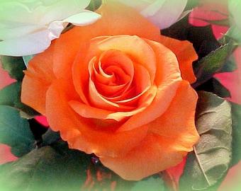 Gorgeous Glossy Photo Print of my Peachy/Orange  Rose