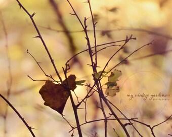 I heart fall autumn - heart leaf - fall photography - autumn decor - autumn photo (5 x 7 Original fine art photography prints) FREE Shipping