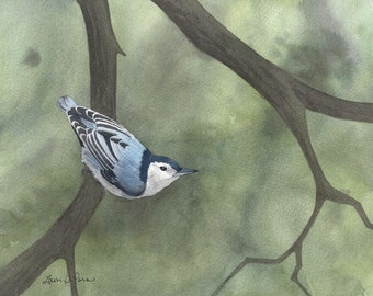 Nuthatch Watercolor Painting - Fine Art Archival Print - Limited Edition Bird Art by Laura D. Poss