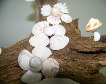 Natural Seashell Flowers & Driftwood Sculpture - Original Handmade - 3d Accent Piece - Beach/Home Decor