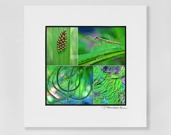 """Nature's green splendor as a 3x3"""" photographic print in a 5x5"""" white, acid free black core mat, frames available"""