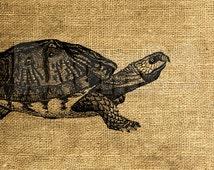 INSTANT DOWNLOAD - Vintage Turtle Illustration - Download and Print - Image Transfer - Digital Sheet by Room29 - Sheet no. 1140
