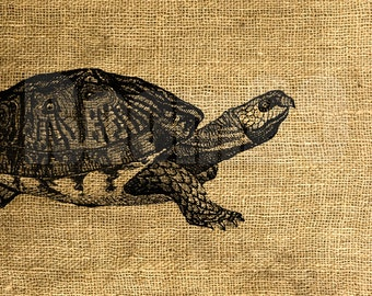 INSTANT DOWNLOAD - Vintage Turtle Illustration - Download and Print - Image Transfer - Digital Sheet by Room29 - Sheet no. 1140
