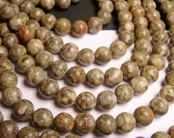 Fossil Jasper - 12mm  round beads -1 full strand - 33 beads - RFG1141