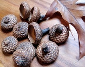 Large Beautiful Acorn Caps in Rich Nut Brown in sets of 36.
