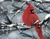 Cardinal glossy or matte profession 11 X 14 art print,wild,bird,red,animal,illustration,art,detailed,
