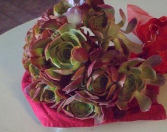 Natural Intact Living Succulent Bouquet