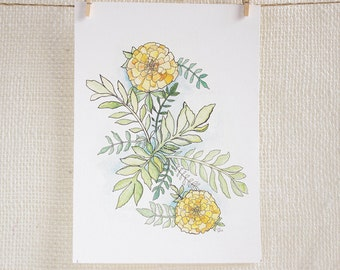 Marigolds - flower watercolor and ink illustration print. Floral, yellow and orange marigold art print.