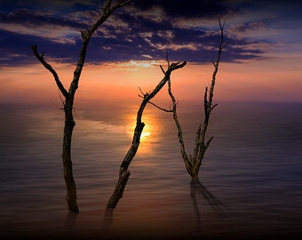 Bare Dead Tree Trunks arising from the Sea with Colorful Sunset on Calm Lake Water No.5272 A Fine Art Nautical Seascape Photograph