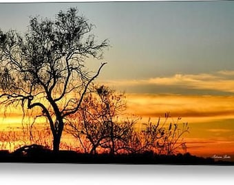 Old Tree At Sunrise Panoramic Canvas Photography. Canvas Wrap