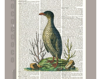 Penguin Art Print, altered art illustration book print dictionary page